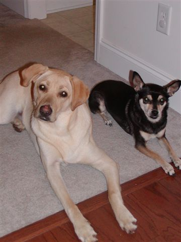 Dog Training Grovetown Ga